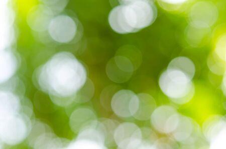 Photo pour Green is a natural, beautiful bokeh. - image libre de droit