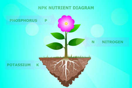 Illustration for NPK Nutrient diagram of plant or tree - Royalty Free Image