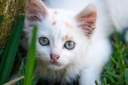 Photo pour A smell cat playing on he grass - image libre de droit