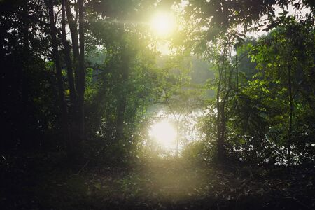Photo for Back lit in nature before sunset in the forest near the river - Royalty Free Image