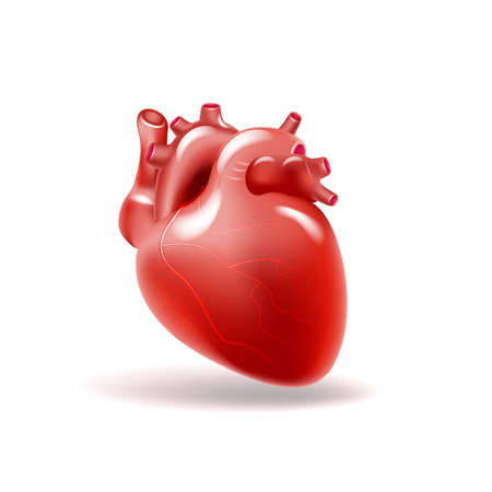 Illustration for Human heart. Medicine, internal organs 3d vector - Royalty Free Image