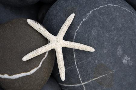 close up of starfish on the rocks