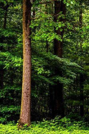Tall trees in a dense, lush