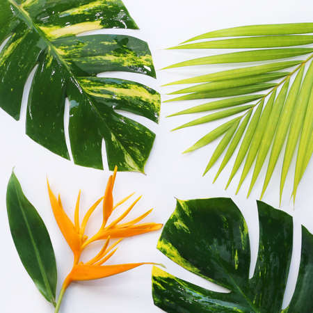 tropical plants with tablet on white background