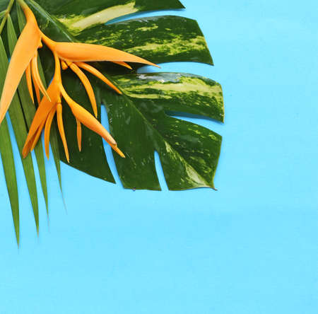 tropical plants  on blue background