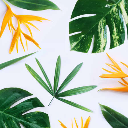 Foto per tropical plants on white background - Immagine Royalty Free