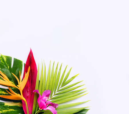 Photo for tropical flowers on a white background - Royalty Free Image