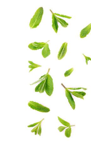 Photo pour Fresh mint leaves on the white background. - image libre de droit