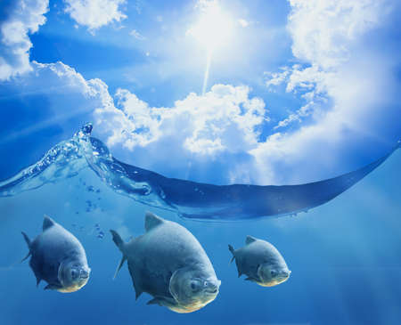 Photo for Fish under the sea surface on it a beautiful sunny sky with clouds - Royalty Free Image