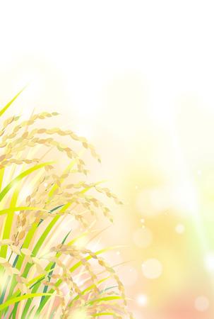Illustration pour Rice field under the sky - image libre de droit
