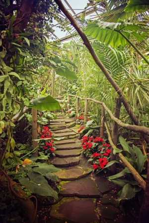 Tropical Footbridge