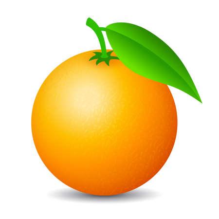 Illustration for Orange fruit vector cartoon isolated on white background - Royalty Free Image