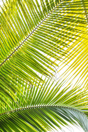 Photo for Palm Sunday background for religious holiday backdrop with green tropical tree leaves against natural sky - Royalty Free Image