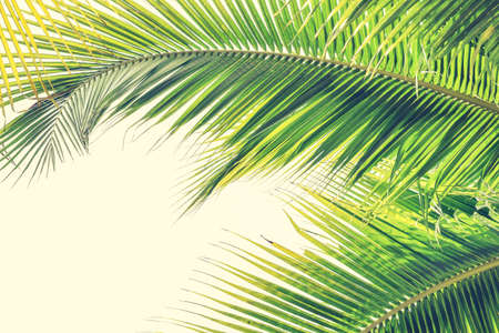 Foto per Palm Sunday background with green tropical tree leaves against natural summer or spring sky - Immagine Royalty Free