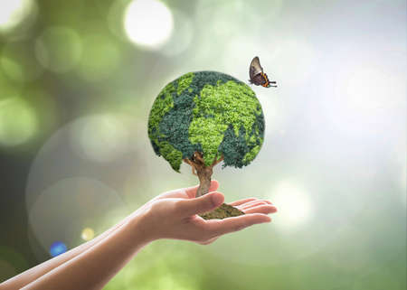 Photo for Green globe tree on volunteer's hand for sustainable environment and natural conservation  in CSR concept - Royalty Free Image
