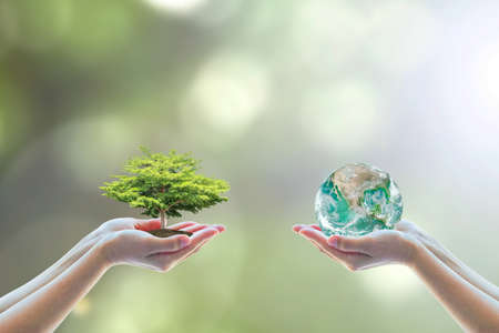Photo for Two people human hands holding/ saving growing big tree on soil eco bio globe in clean CSR ESG natural sunlight background - Royalty Free Image