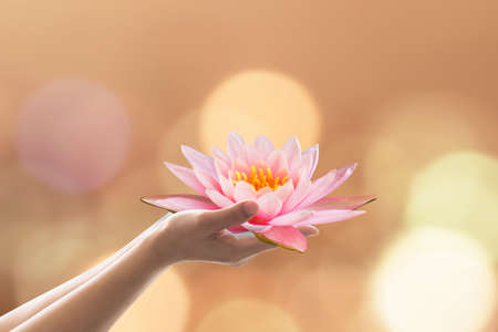 Photo for Buddha's birthday worshiping concept with woman's hands holding water lilly or lotus flower - Royalty Free Image