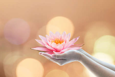 Photo for Vesak day, Buddhist lent day, Buddha's birthday worshiping concept with woman's hands holding water lilly or lotus flower - Royalty Free Image