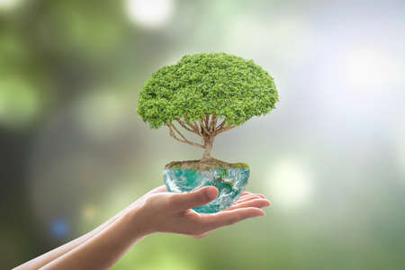 Foto per Planting tree in green globe planet on volunteer's hands for world environment day, eco friendly concept. - Immagine Royalty Free