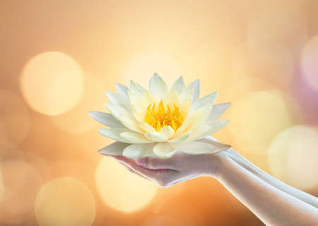 Photo for Vesak day, Buddhist lent day, Buddha's birthday, Purnima buddhism religious worshiping, and world human spirit concept with woman prayer's hand holding lotus water lilly flower praying and sacrificing - Royalty Free Image