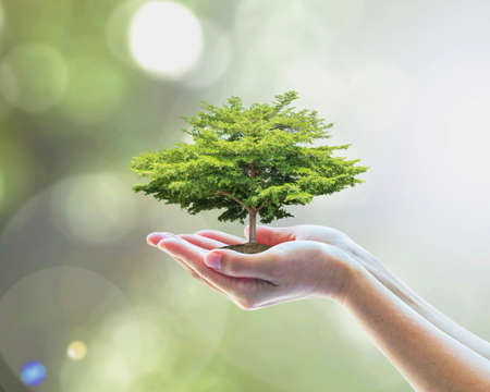 Foto de Sustainable environment, saving environmental ecosystem of forest, and go green concept with tree planting on volunteer's hands - Imagen libre de derechos