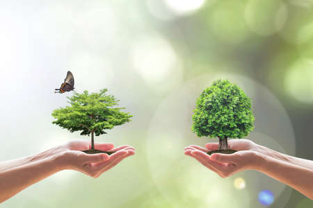 Photo pour Environmental biodiversity in ecosystem concept with bio diversity in species of tree planting and saving biological life living in clean environment on volunteers hands - image libre de droit