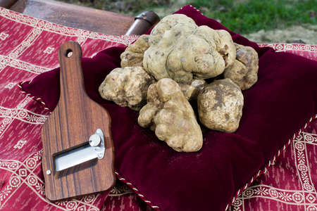 Photo pour White Truffles resting on a red pillow with a side truffles slicer - image libre de droit