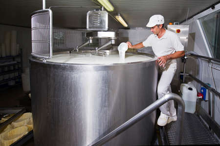 Cheesemaker pours rennet in a large tank full of milk steel