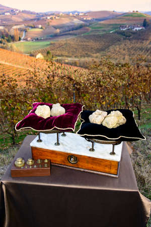 Some white truffles on the vintage scales with red pillows, on background hills with vineyards in autumn Langhe Piedmont Italy