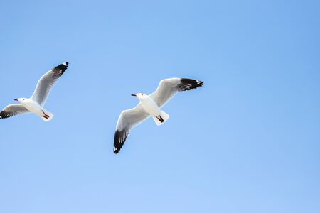 Photo for Aerial top view Seagulls fly in the mangrove forest beside the sea. - Royalty Free Image