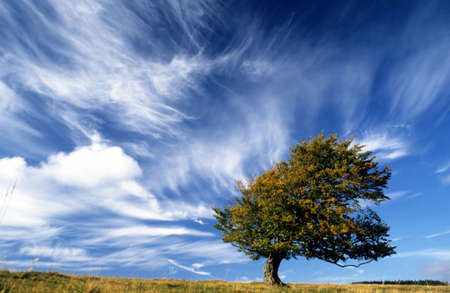 Lonely tree on top of a hill with strong wind blowing