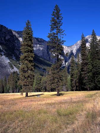 Trees in fields, Yosemite valley, Yosemite National Park, California, USA