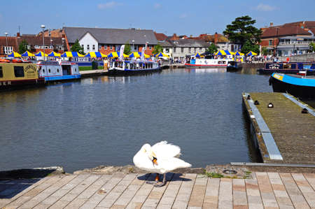 Stratford-upon-Avon, UK - May 18, 2014 - Swan on the towpath with pleasure boats in the canal basin to the rear, Stratford-Upon-Avon, Warwickshire, England, United Kingdom, Western Europe