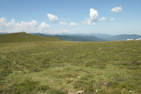 Meadow in Pyrenees, south of France in Occitania