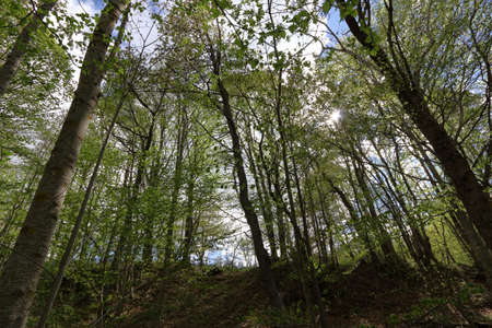 Pyrenean forest in spring