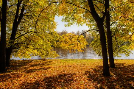 Photo pour sunny landscape with trees in the autumn park - image libre de droit