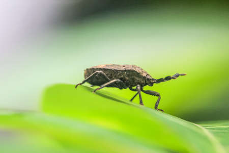 Photo for close up photo of the insect on a leaf with a blurred background - Royalty Free Image