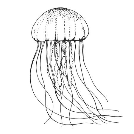 Illustration pour Hand drawn jellyfish. Vector illustration in sketch style - image libre de droit