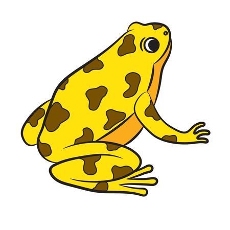 Cartoon of Poison-Dart Frog. Vector