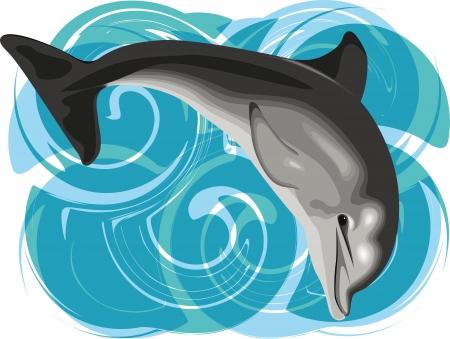 Dolphin vector illustration