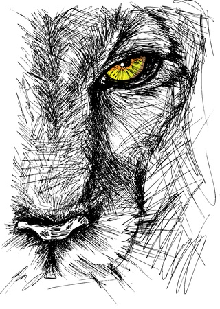 Illustration pour Hand drawn Sketch of a lion looking intently at the camera.  - image libre de droit
