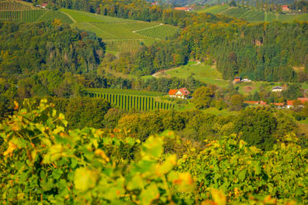 Vineyards along South Styrian Wine Road, a charming region on the border between Austria and Slovenia with green rolling hills, vineyards, picturesque villages and wine taverns