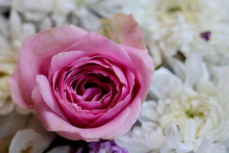 Photo pour One Pink rose flowers arrange on white flowers - image libre de droit