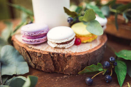 Colorful macaroons on a round wood log with green leaves