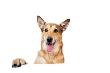 Photo for View at happy charismatic dog sitting, looking aside, isolated on white - Royalty Free Image