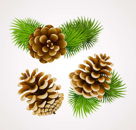 branch of fir tree and cones