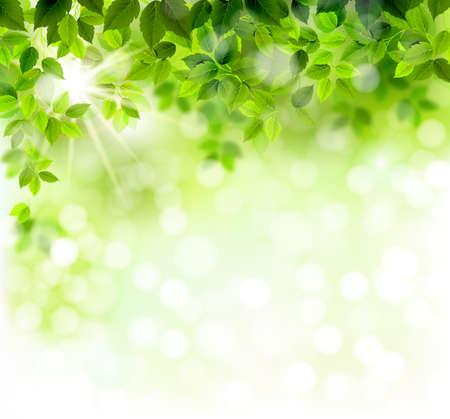 Illustration pour Summer branch with fresh green leaves - image libre de droit