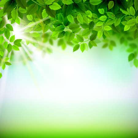 Illustration pour Summer branches with fresh green leaves - image libre de droit