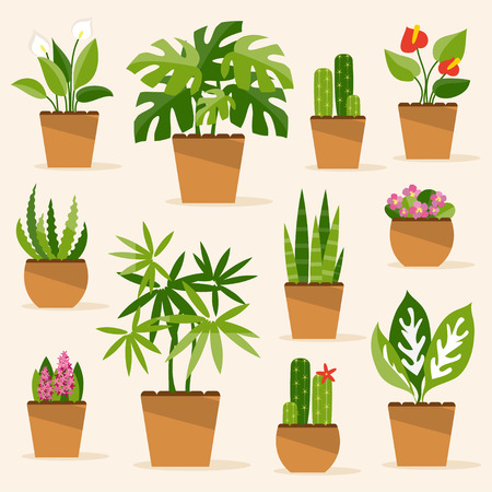 Illustration for A collection of indoor plants and flowers - Royalty Free Image