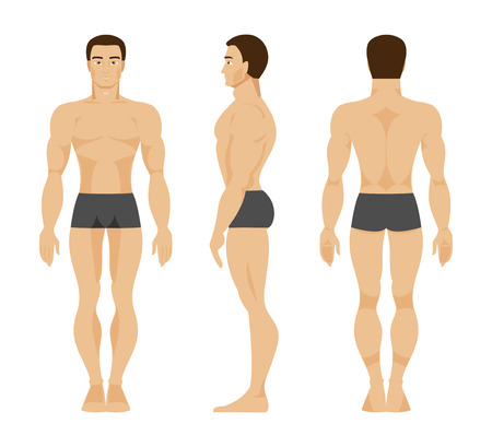 Illustration pour Anatomy of the male body in the front, rear and side - image libre de droit